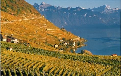 Vignoble-suisse