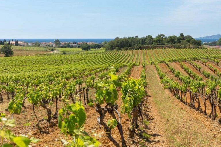 Vignes-Bormettes