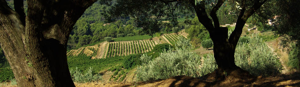 Vignes-Canadel