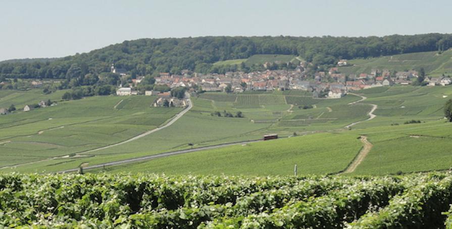 Vignes-autour-dHautvillers